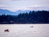 Orca sighiting at Tyee Spit